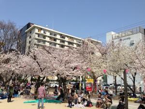 江坂公園のさくら(2)