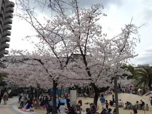 江坂公園の桜その2
